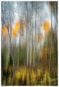 %22Birches at Secord%22 Abstract