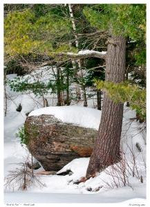 """Rock & Pine"" -  Ahmik Lake"