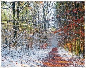 """November Frosting"""
