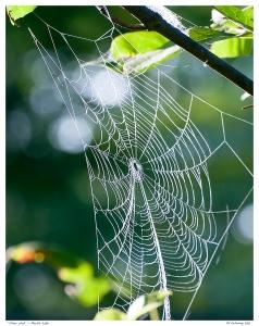"""""""Silver Web"""" - Marble Lake"""