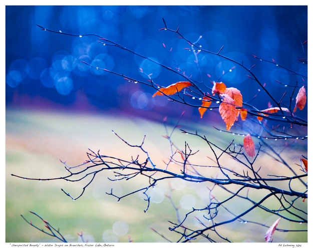 """Unexpected Beauty"" - Water Drops on Branches, Fraser Lake,"