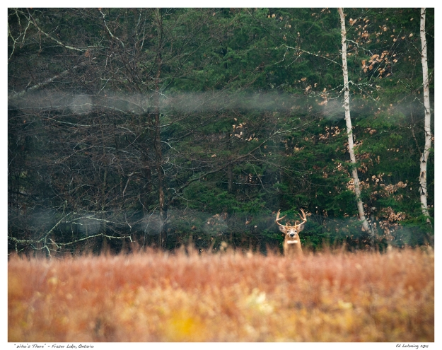 """""""Who's There"""" - Fraser Lake, Ontario"""