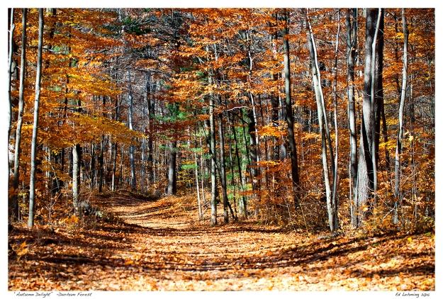 """""""Autumn Delight""""  -Durham Forest"""