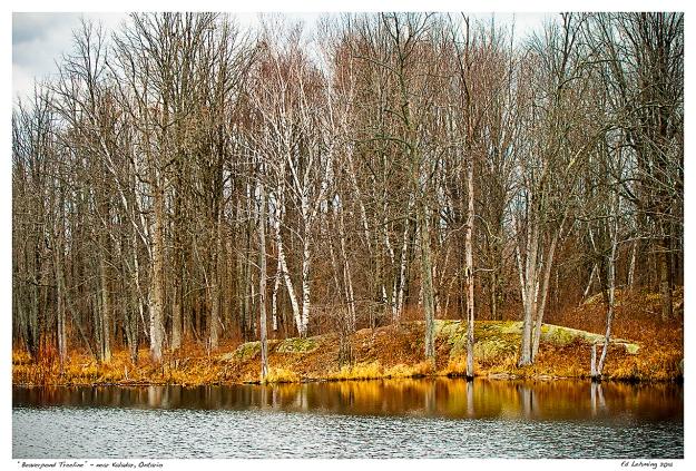 """""""Beaverpond Treeline"""" - near Kaladar, Ontario"""