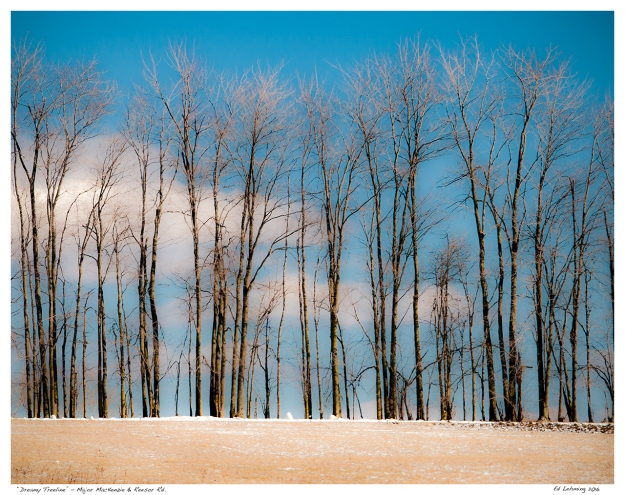 """Dreamy Treeline"" - Major MacKenzie & Reesor Rd."
