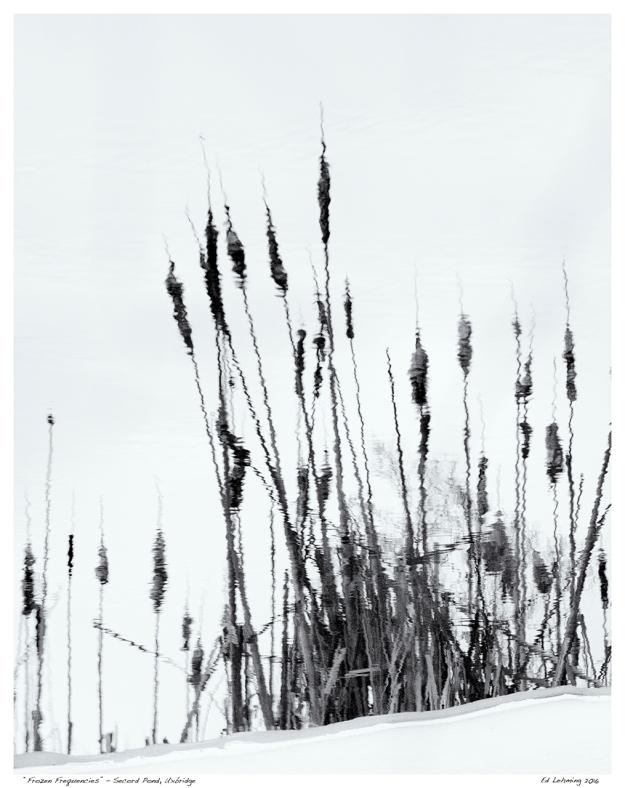 """""""Frozen Frequencies"""" - Secord Pond, Uxbridge"""