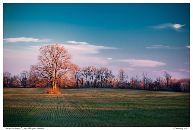 """""""Bathed in Sunset"""" - near Glasgow, Ontario"""