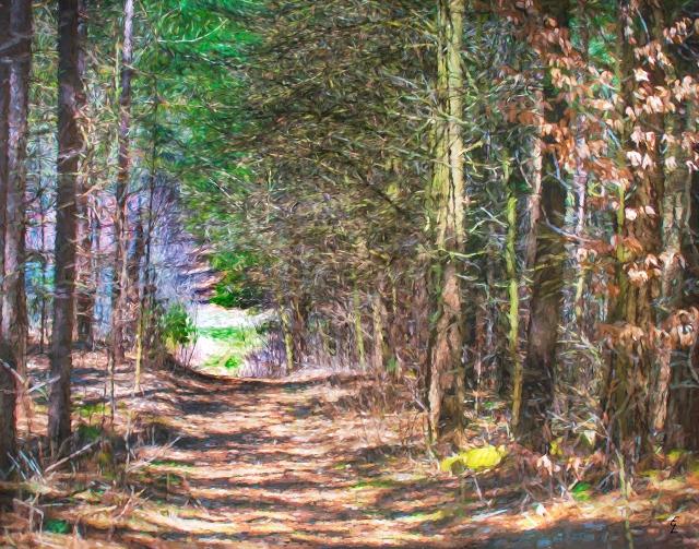 """Spring Forest Walk"""