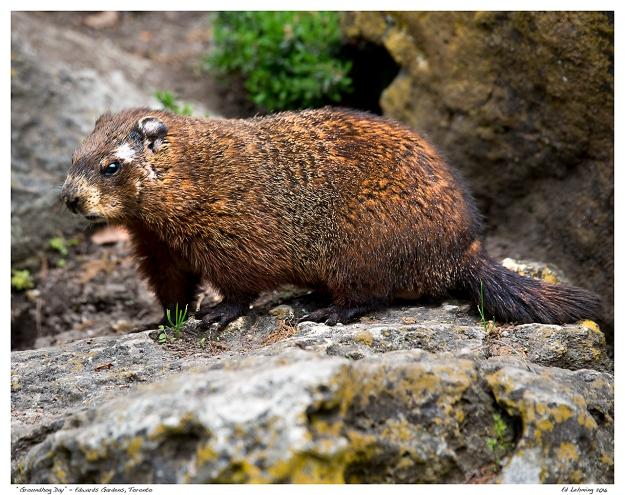"""Groundhog Day"" - Edwards Gardens, Toronto"