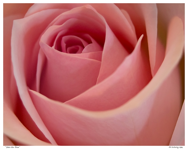 """""""Into the Rose"""""""