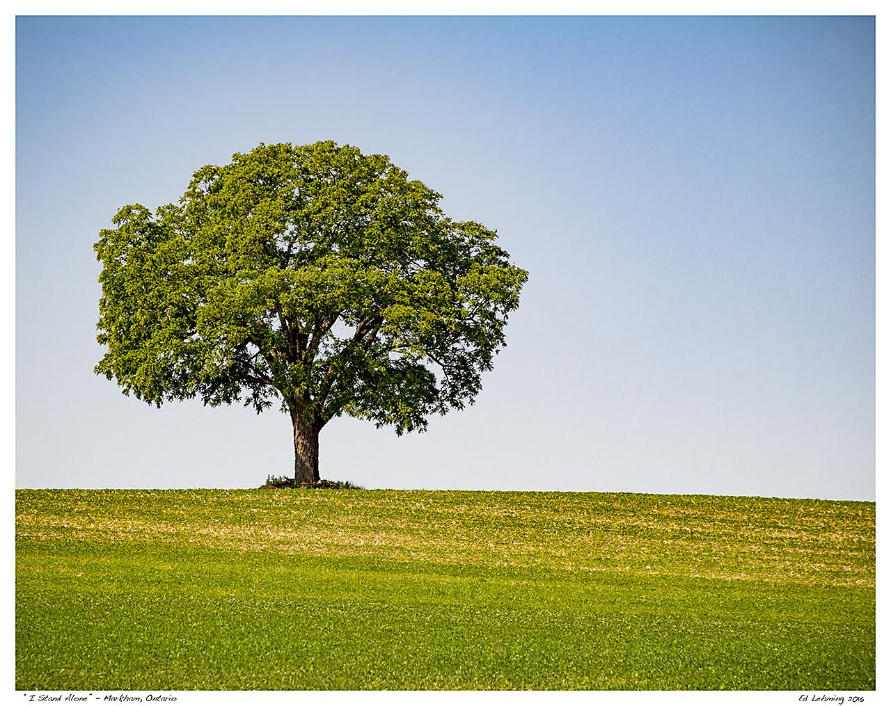 """I Stand Alone"" - Markham, Ontario"