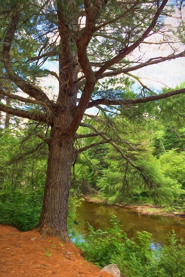 Papineau Creek Guardian