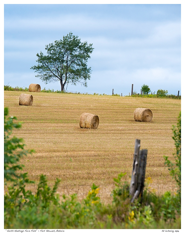 """North Hastings Farm Field"" - Fort Stewart, Ontario"