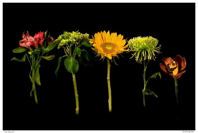 """""""Five Flowers"""""""