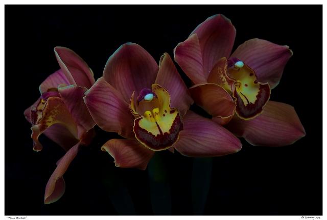 """Three Orchids"""