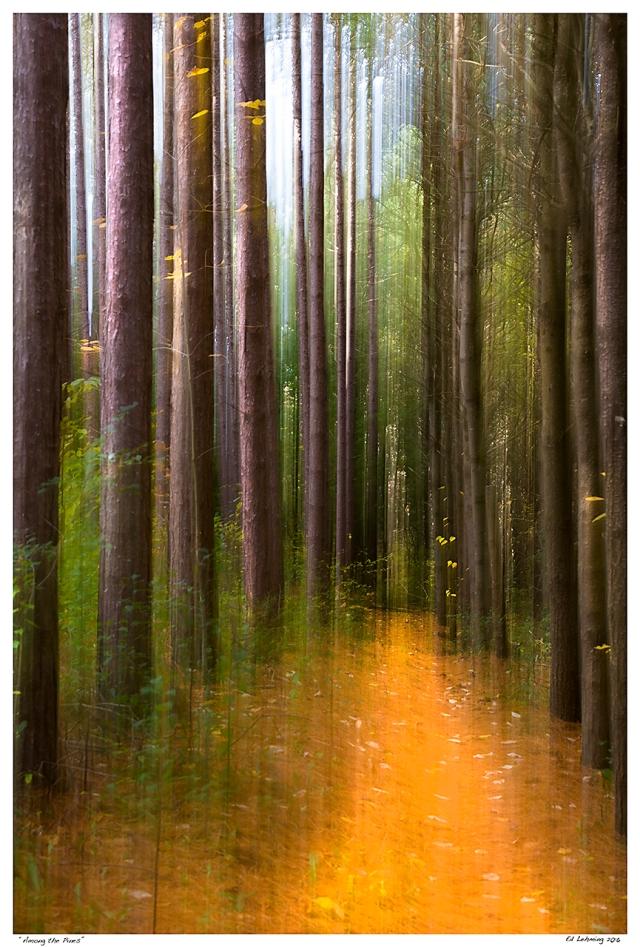 """""""Among the Pines"""""""