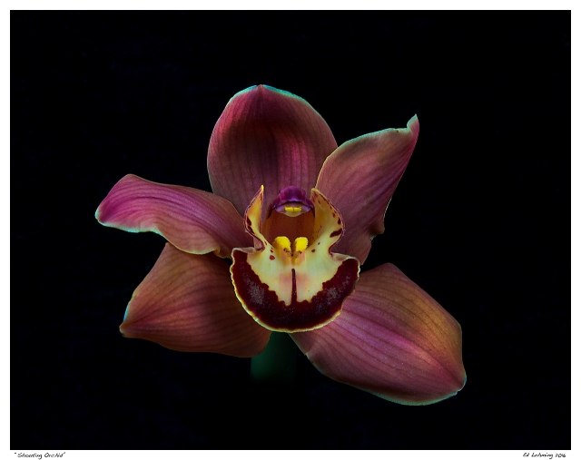"""""""Shouting Orchid"""""""