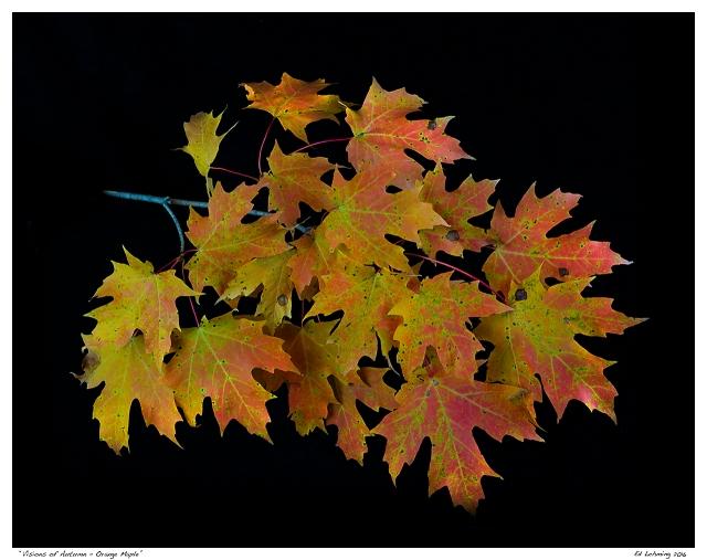 """""""Visions of Autumn - Orange Maple"""""""