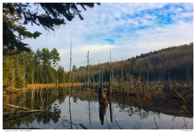 """Northern Serenity"" - Hermon, Ontario.jpg"