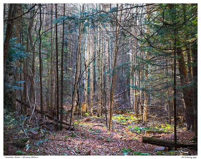 """Sunshine Grove- Hermon, Ontario"