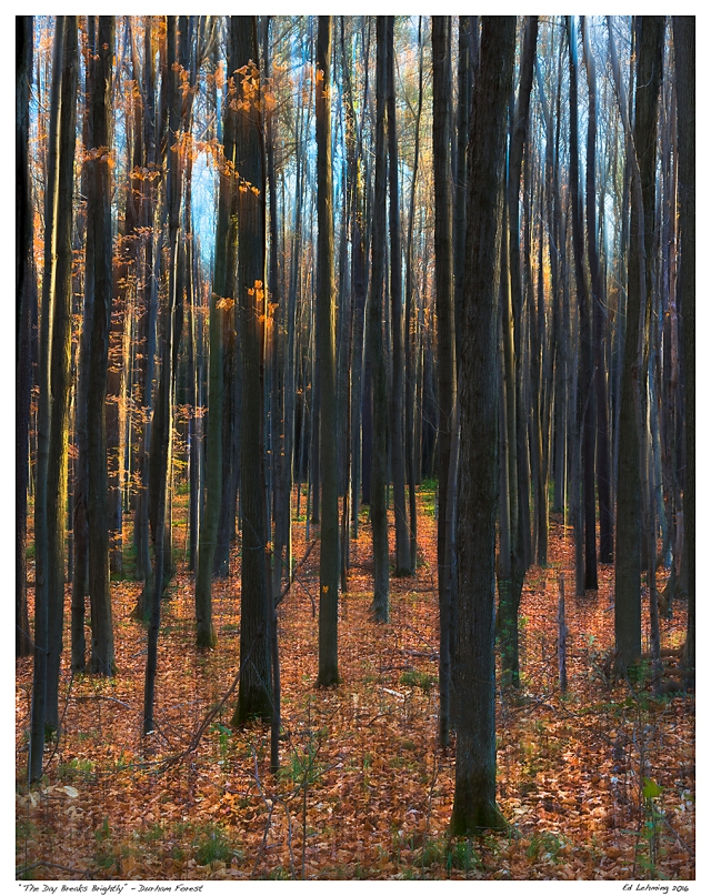 """""""The Day Breaks Brightly"""" - Durham Forest.jpg"""