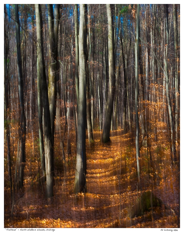 """Trailhead"" - North Walkers Woods, Uxbridge"