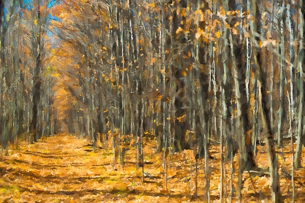edge-of-the-forest-trail