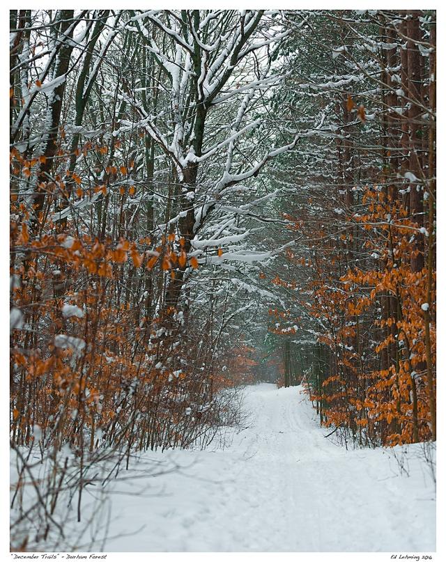 """""""December Trails"""" - Durham Forest"""