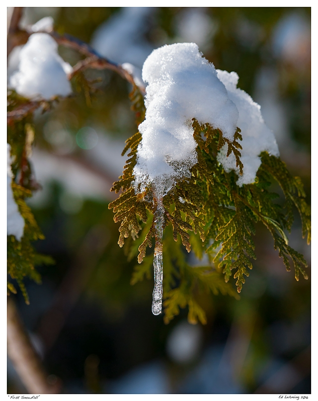 """First Snowfall"""