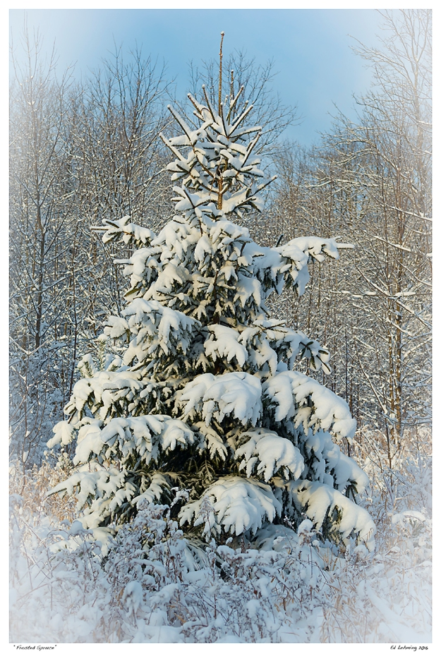 """Frosted Spruce"""