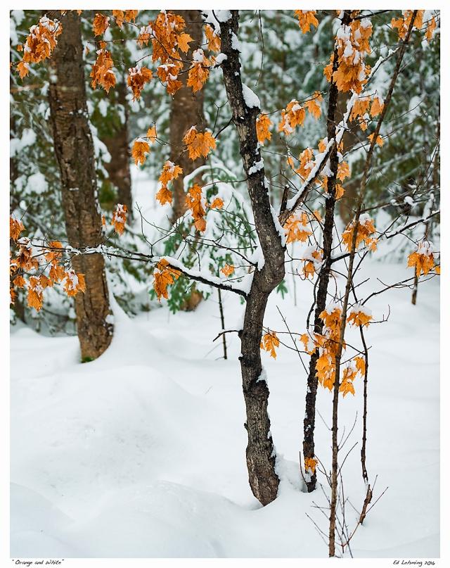 """Orange and White"""