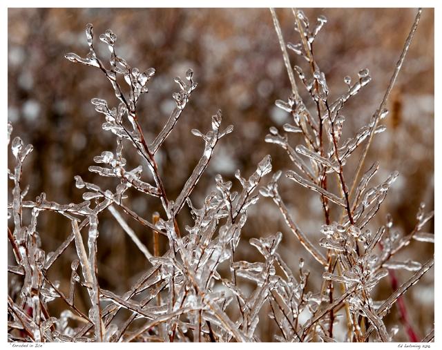 """Enrobed in Ice"""