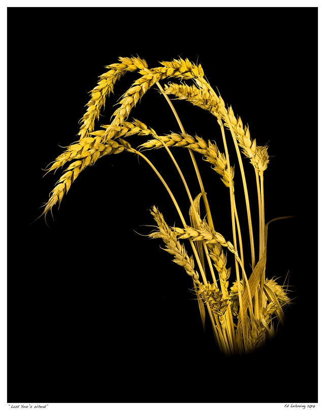 """Last Year's Wheat"""