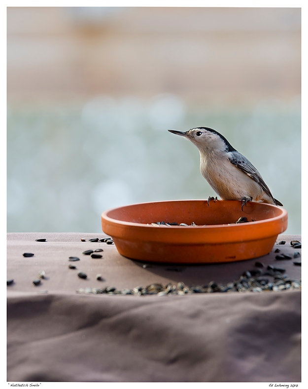 """Nuthatch Smile"""