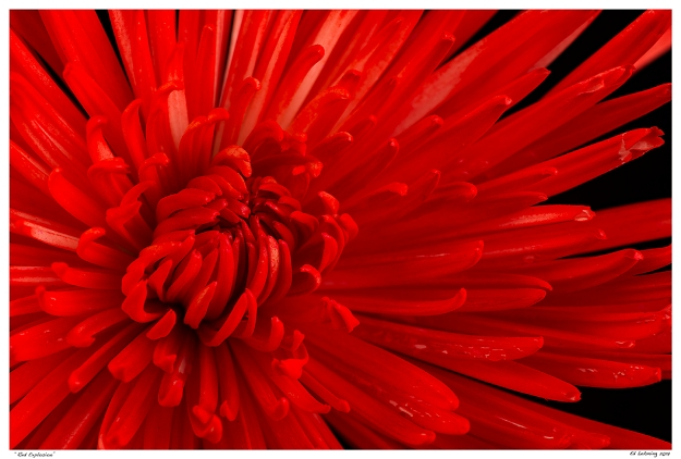 """""""Red Explosion"""""""