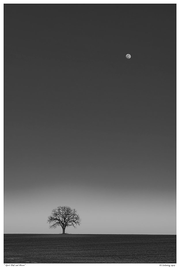 """April Oak and Moon"""