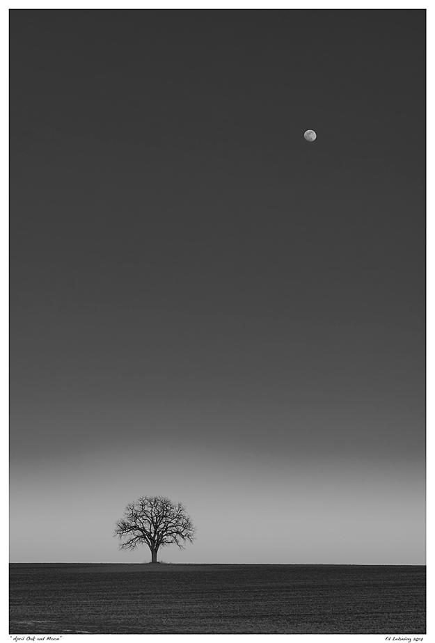 """""""April Oak and Moon"""""""