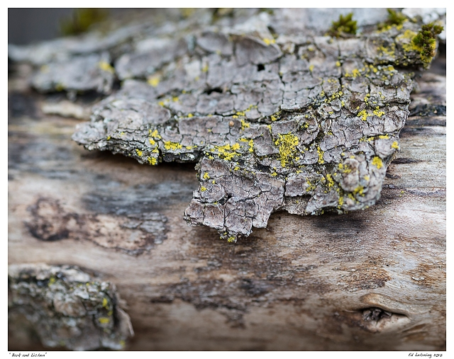 """Bark and Lichen"""