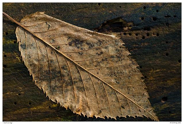"""""""Leaf on Log"""""""