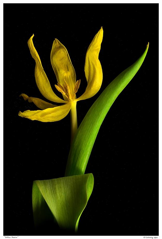 """Yellow Dancer"""