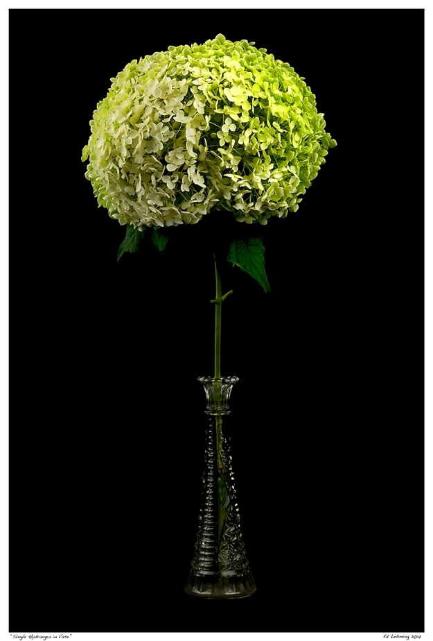"""Single Hydrangea in Vase"""