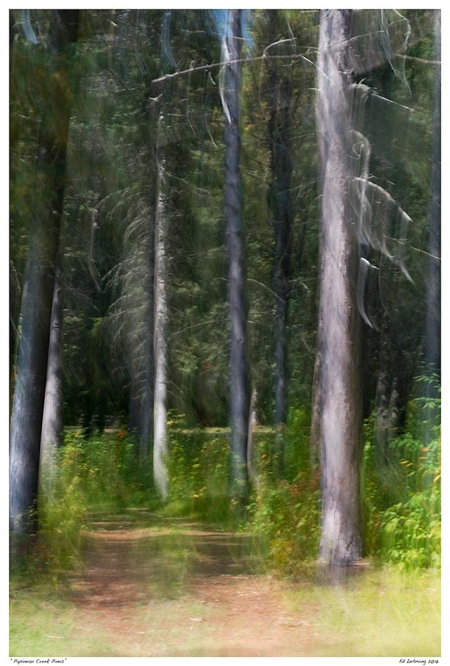 """""""Papineau Creek Pines"""""""