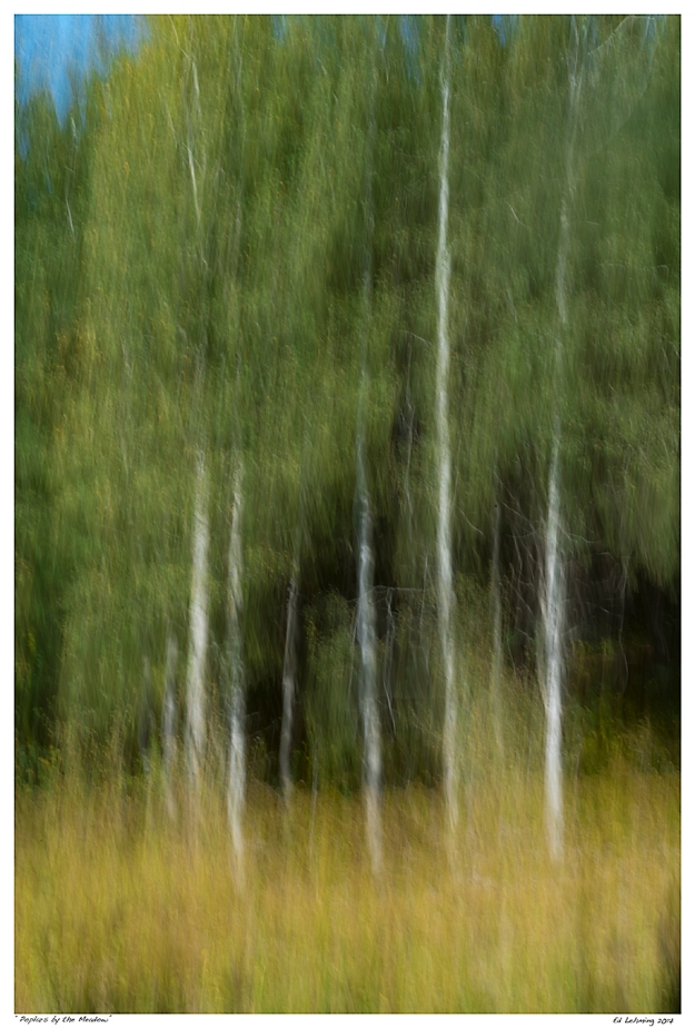 """Poplars by the Meadow"""