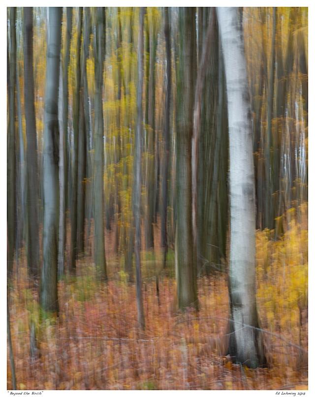 """""""Beyond the Birch"""""""