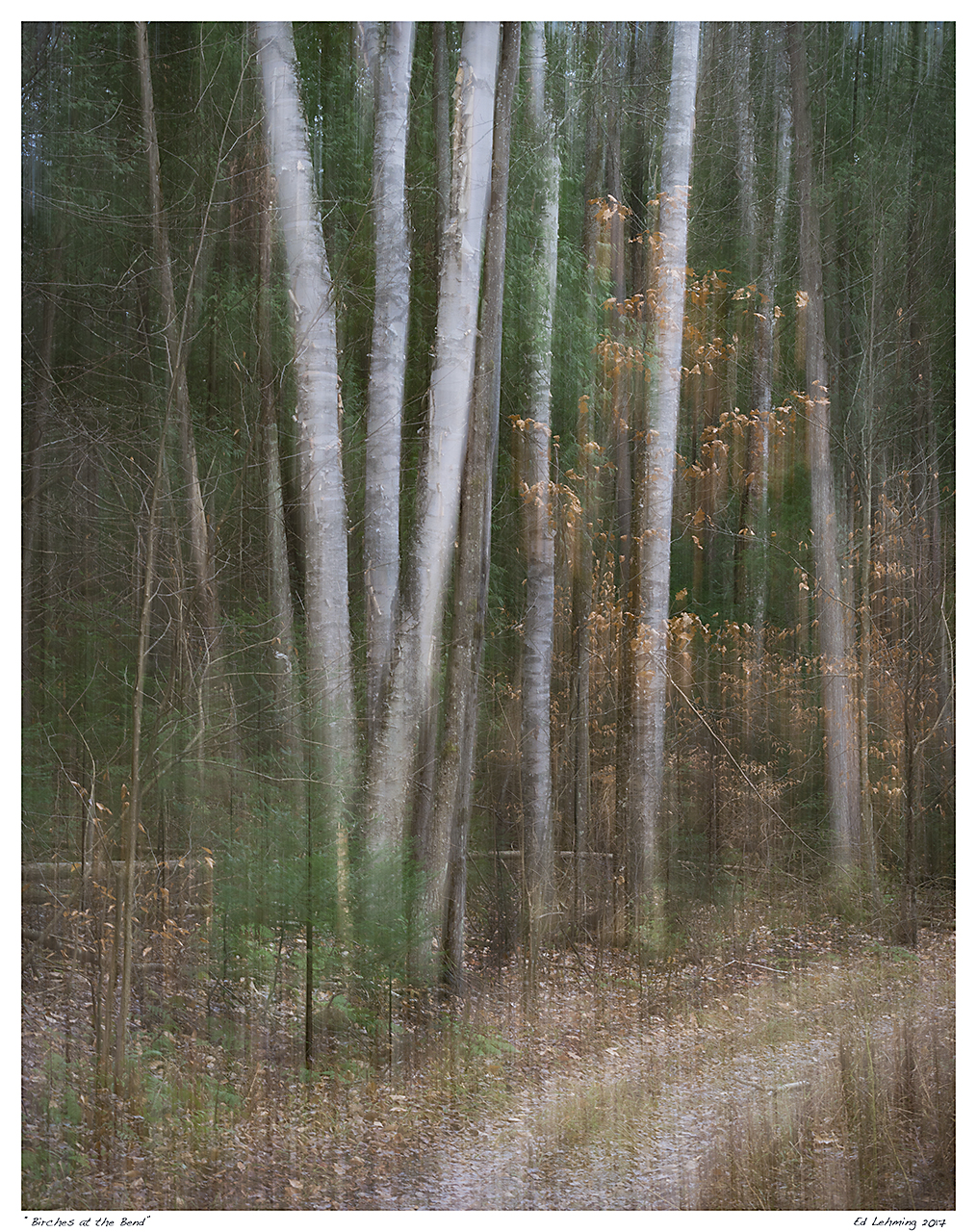 """Birches at the Bend"""