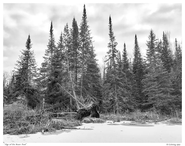 """Edge of the Beaver Pond"""