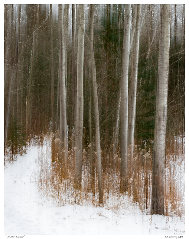 """Winter Woods"""