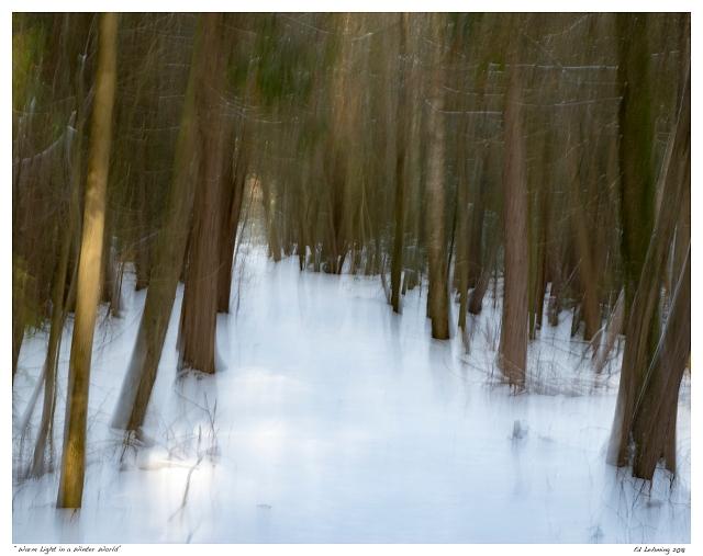"""Warm Light in a Winter World"""