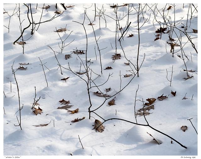 """Winter's Litter"""