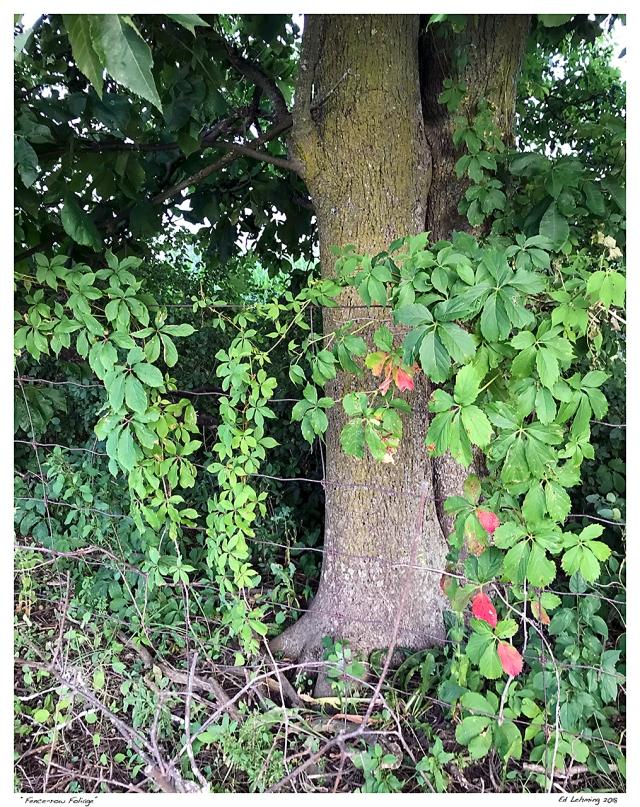 """""""Fence-row Foliage"""".jpg"""